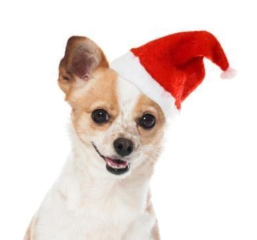 good-boy-santa-hat-26cm-christmas-dog-hat-for-puppies-and-dogs-one-size-fits-all-9613-p